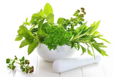A gyógynövények erősítik az immunrendszert